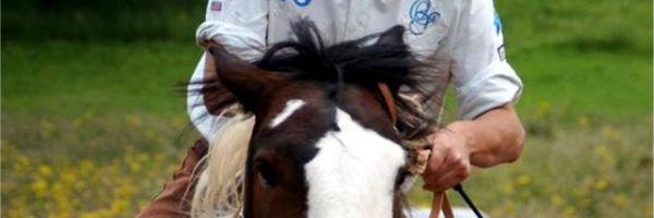 Die Grammatik des Reitens - Körperspannung des Reiters